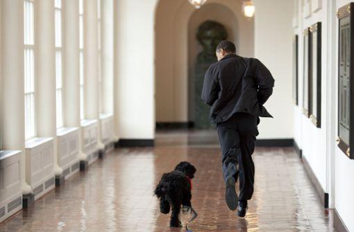 Bye bye, Bo – ein Nachruf in Bildern