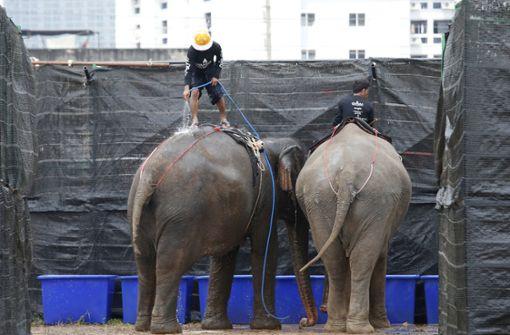Elefanten bei Poloturnier misshandelt – Pfleger entlassen