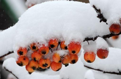 Schnee auf der Alb und im Schwarzwald