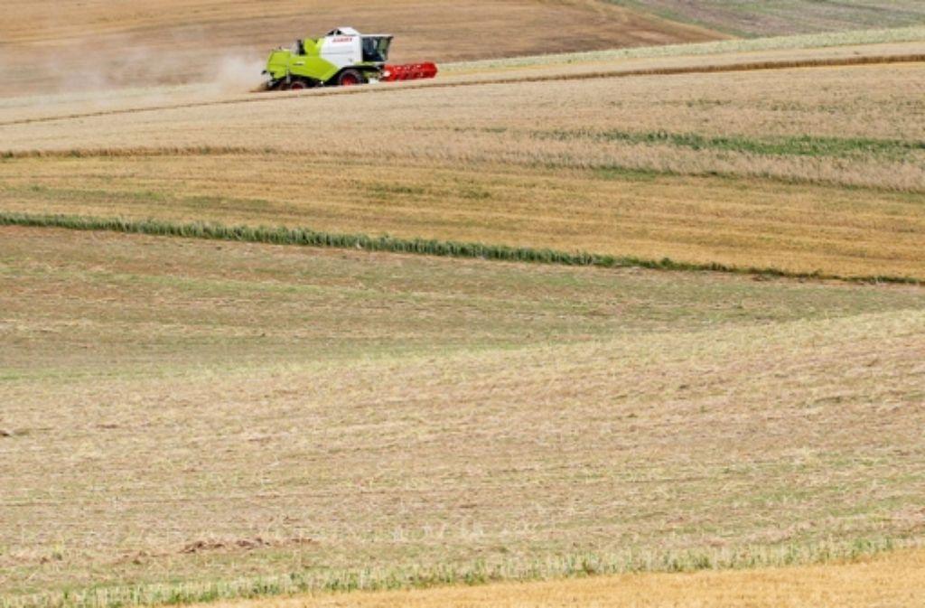 Neben Weizen gibt es noch eine Fülle an anderen Getreidearten, die heutzutage aber nur selten genutzt werden. Foto: dpa
