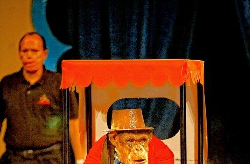 Wirbel um Schimpansengruppe