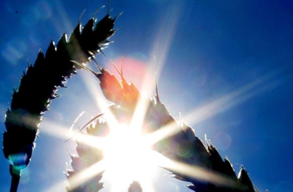 Winterweizen im Gegenlicht – auch die Rätselfragen drehen sich rund um die kalte Jahreszeit. Foto: dpa