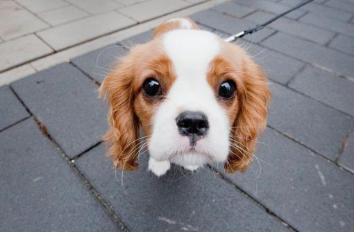 Was Hunde  brauchen und machen  –  ein HUNDE-Alphabet