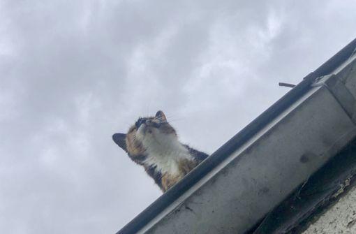 30-Jährige will Katze retten und stürzt durch Dach