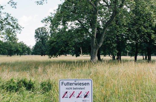 Wer den falschen Rasen betritt, zahlt 30 Euro