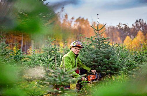 Harte Zeiten  für Weihnachtsbäume