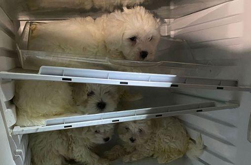 Polizei befreit Hunde - und Welpen aus Kühlschrank