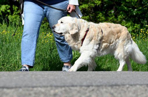 Das sollten Hundehalter über die Regelung wissen