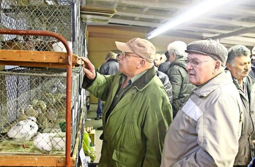 Strenge Auflagen zwingen Kleintierzüchter in die Knie