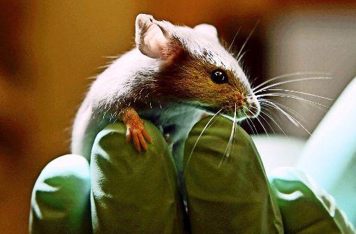 Brauchen wir Tierversuche?