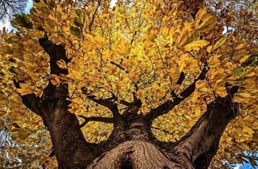 So schön kann der Herbst im Schönbuch sein