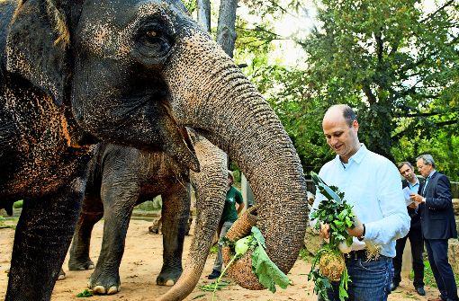 Elefantendamen begrüßen das 33333. Mitglied