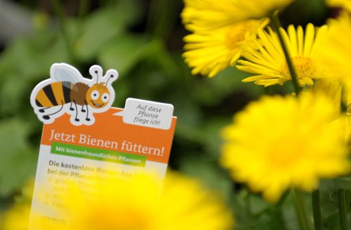 Mit Samentütchen gegen das Bienensterben