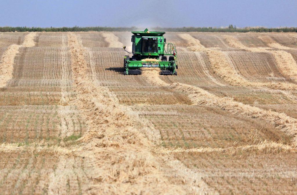 Weizenernte in Kanada: Das Land gehört zu den fünf größten Exportregionen der Welt. Foto: AP