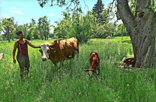 Leben auf dem Reyerhof die glücklichsten Kühe?