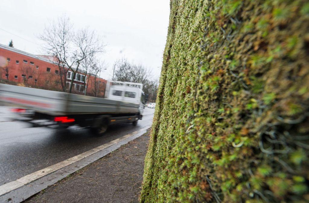 Das Experiment mit Deutschlands erster großflächiger Mooswand gegen Feinstaub soll nach Angaben des Landes bis zum Jahresende erste Ergebnisse liefern. Foto: dpa