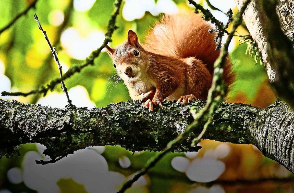 Eichhörnchen sind häufige Besucher auf Friedhöfen. Foto: dpa/Thomas Warnack
