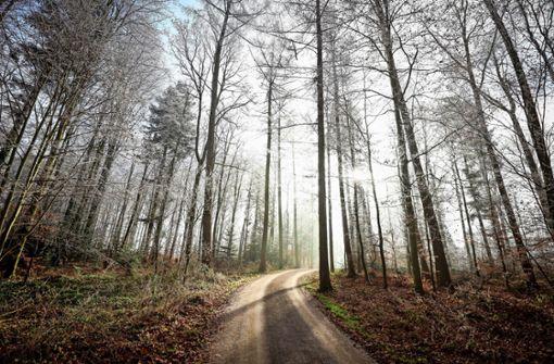 Radweg: Landrat verärgert über Bürgermeister