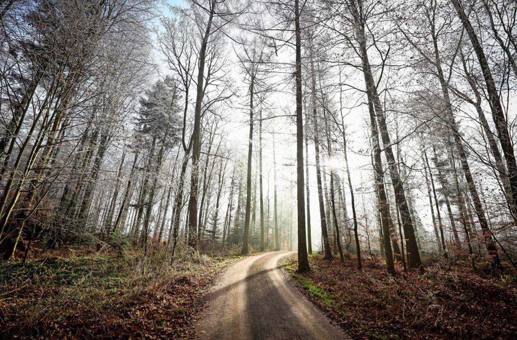 Der Waldweg Perouser Allee kann schon sehr idyllisch sein. Doch wie geeignet ist er für den Alltagsradverkehr? Foto: factum/Simon Granville