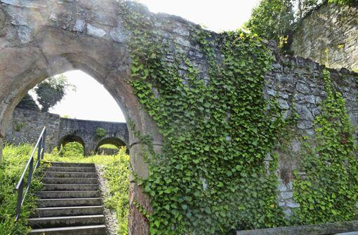 Efeu droht die Mauern der  Burgruine zu zerstören