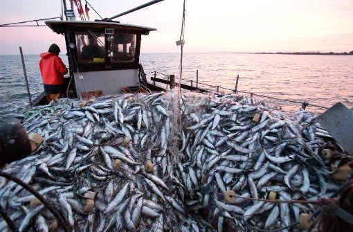 Menschen geben mehr Geld für Fisch aus