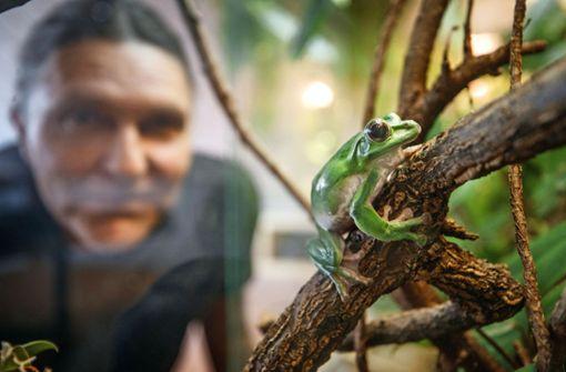 Salamander Lurchi  hat ihn geprägt