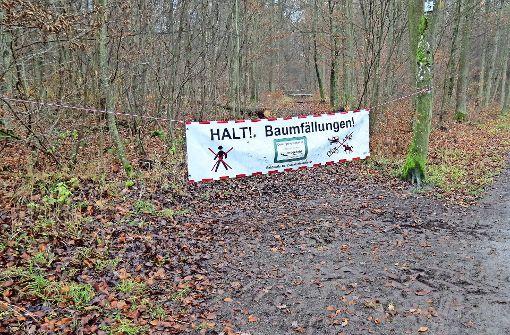 Waldarbeiter fällen 400 Bäume
