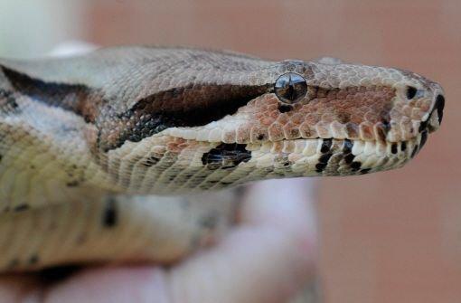 21.7.: Schwangere Schlange auf Abwegen