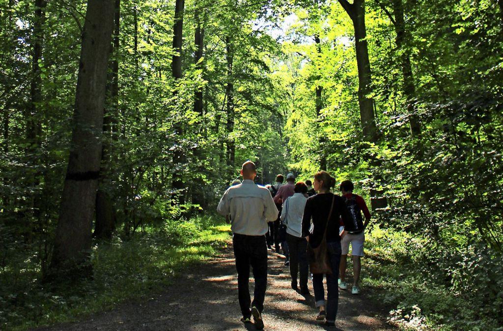Der Schein trügt: Der Dürrlewangwald wirkt zwar üppig grün. Doch die Bäume leiden unter der Hitze und der Trockenheit. Foto: Caroline Holowiecki