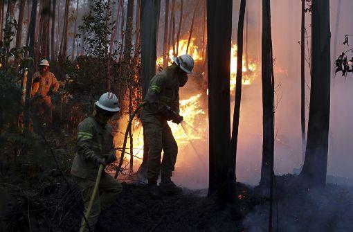 Mehr als 60 Menschen sterben bei Waldbrand