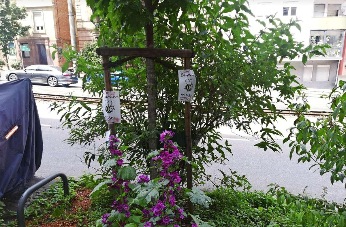 Um einen Baum herum blühen Pflanzen. Sie sollen den bedrohten Bienen Pollen und Nektar als Nahrung bieten. Foto: /Cedric Rehman