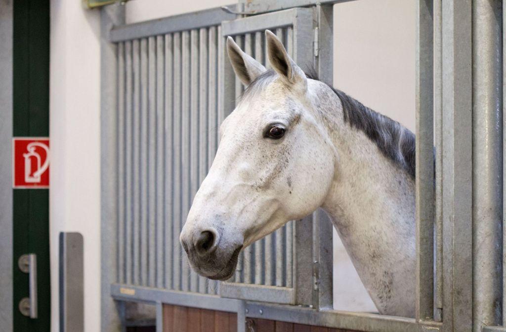 Ein unbekannter Täter ist in eine Pferdebox in Aichwald eingedrungen und hat sich an einer Stute vergangen. (Symbolbild) Foto: dpa