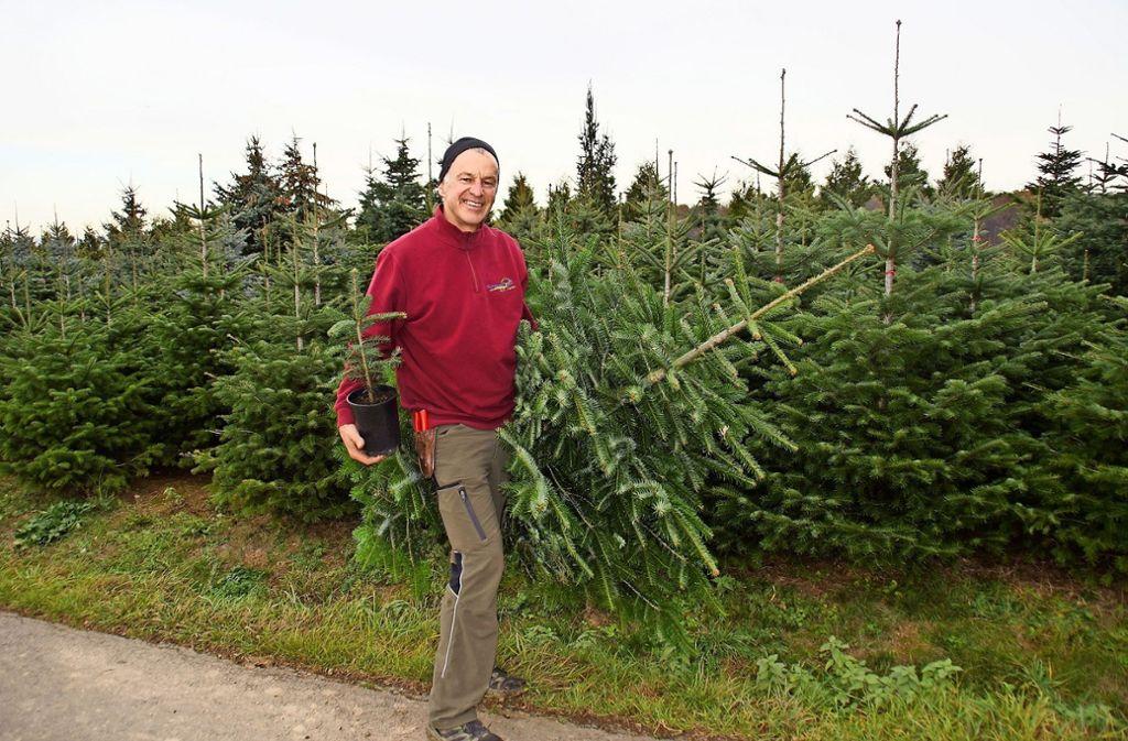 Vom Bäumle zum Baum:  Die Nadelhölzer der Baumschule  Schweizer sollen eines Tages geschmückt und erleuchtet eine Weihnachtsgesellschaft glücklich machen. Foto: Leonie Schüler
