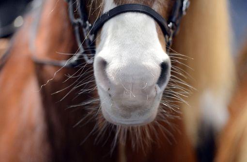 Pferdeschänder hat wieder zugeschlagen