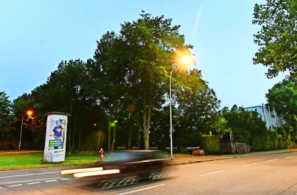 Der Tatort: In einem Gebüsch in der Nähe einer Freiburger Diskothek wurde eine junge Frau von mehreren Männern vergewaltigt. Foto: dpa