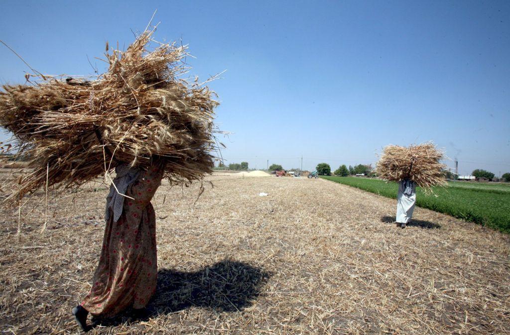 Weizenernte in Ägypten: Das Getreide hat in diesem Land eine hohe kulturelle Bedeutung. Foto: dpa