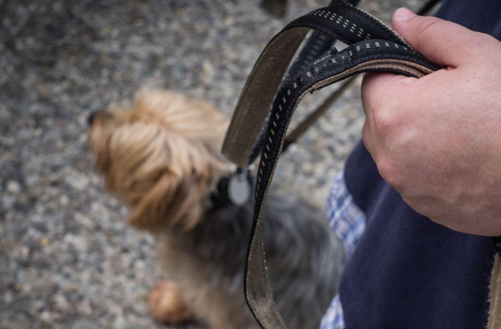 Beim Gassigehen sind ein Mann und sein Hund von einem Auto angefahren worden und gestorben (Symbolfoto). Foto: Lichtgut/Max Kovalenko