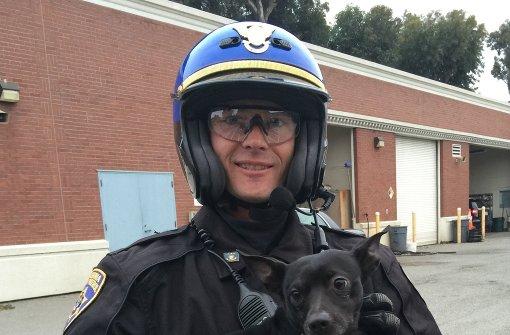 Chihuahua bei Verfolgungsjagd auf Brücke gerettet