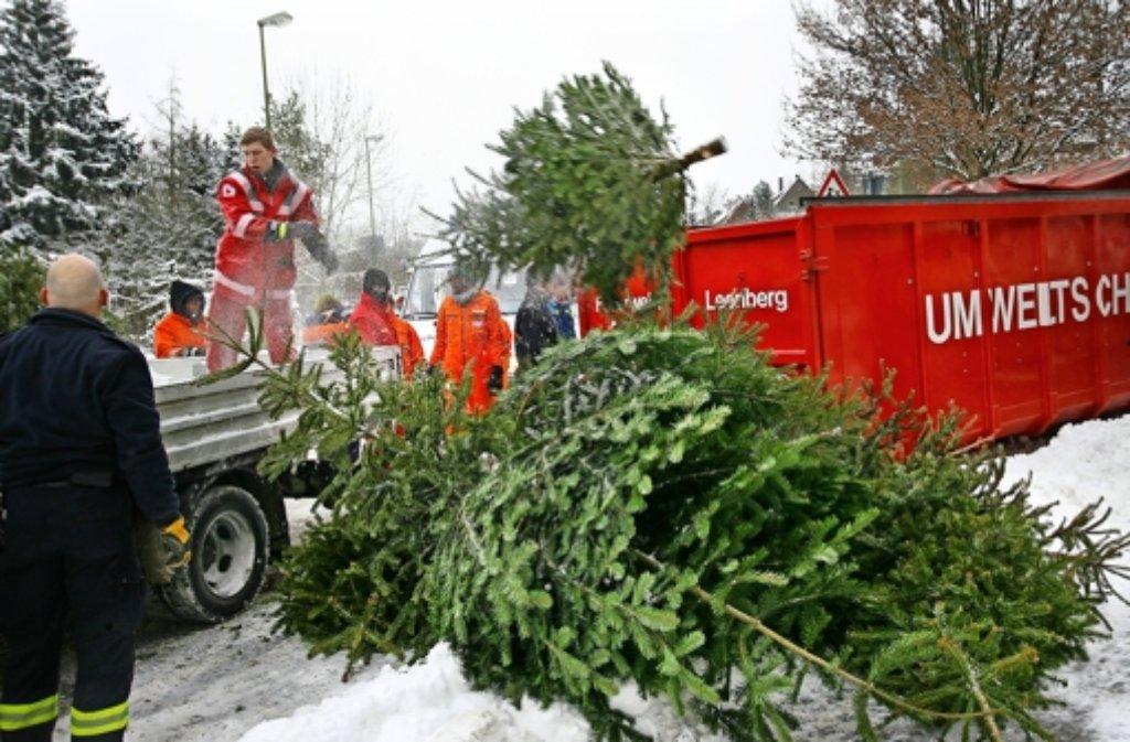 Meist werden die Bäume bei Schnee gesammelt wie hier im Silberberg. Foto: Archiv