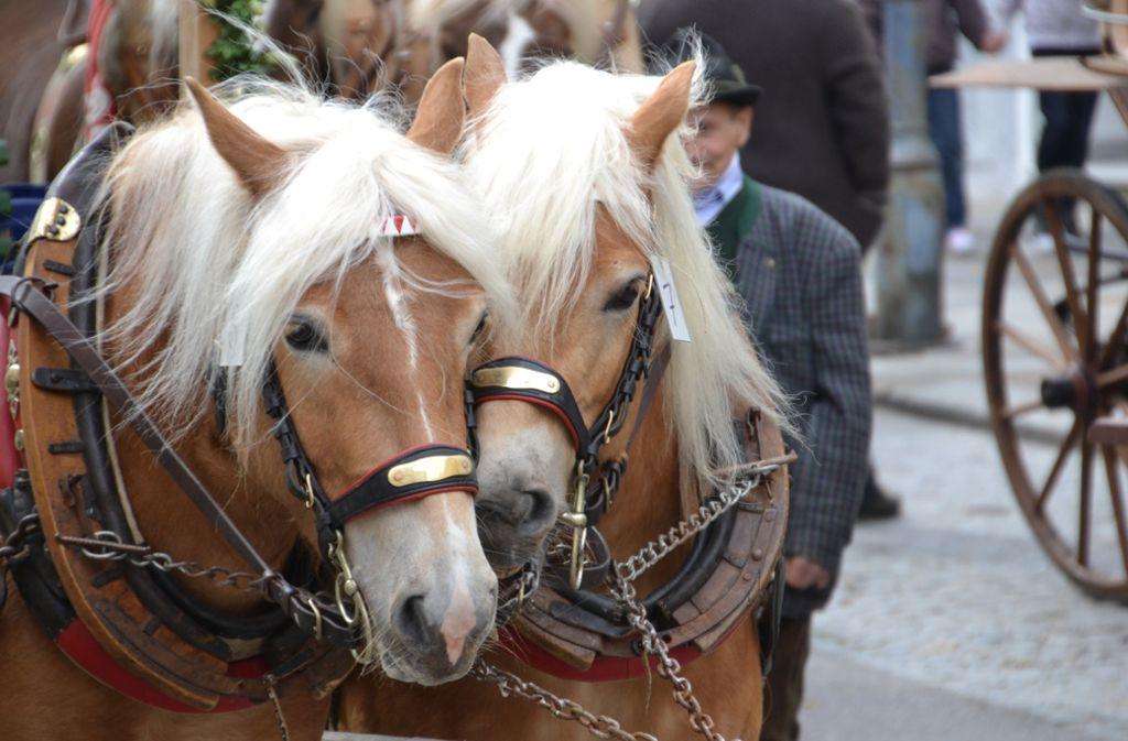 Das schönste Pferd im Land? Schaulaufen beim Leonberger Pferdemarkt. Foto: Pixabay