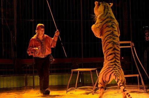 8. August: Vandalen wüten im Zirkus, verfolgt und gestellt