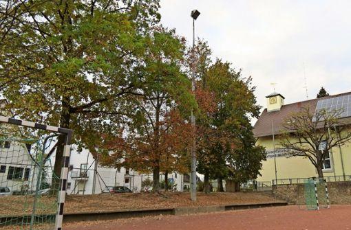 Für den Neubau werden 13 alte Bäume gefällt