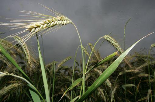 Bauern bekommen Hilfe im Kampf gegen Wetterextreme