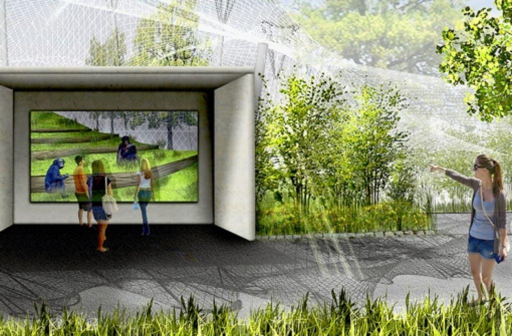 So wird die  Zukunft des Affenhauses der Wilhelma aussehen. Mensch und Menschenaffe werden sich auf Augenhöhe begegnen können – ganz ohne Gitter. Foto: Achim Zweygarth