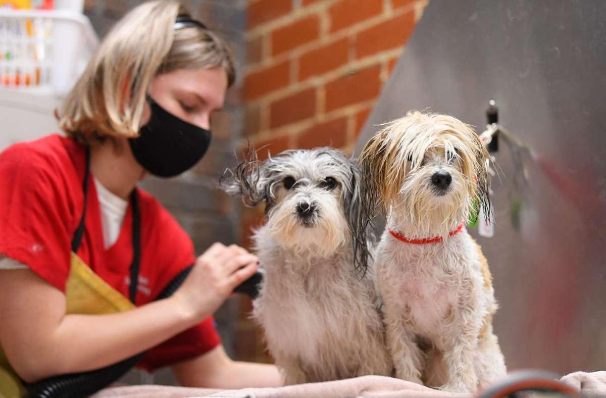 Die Frisur des Hundes sitzt auch im Corona-Lockdown. Foto: dpa/James Ross