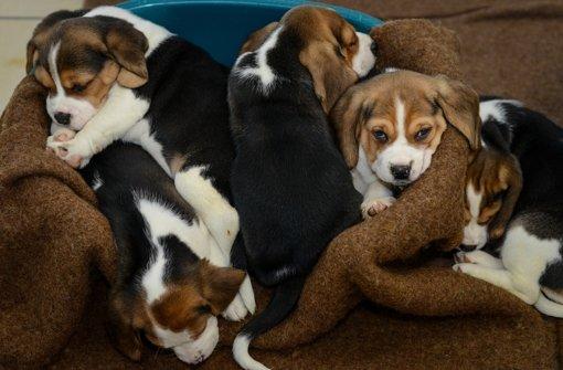 27.10.: Hundewelpen ausgesetzt