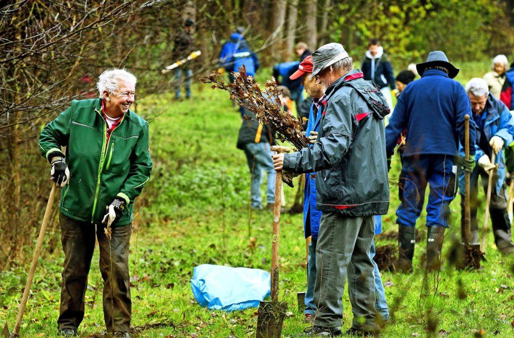 Mitglieder verschiedener Vereine, Schüler und Gemeinderäte haben Schwarzerlen, Stieleichen, Zitterpappeln und Birken gepflanzt. Foto: /Horst Rudel