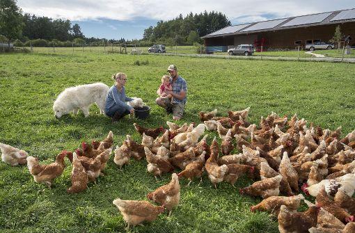Wo Hühner, Hunde und Schweine  glücklich sind