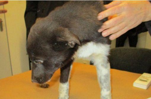 Polizei stoppt Hunde-Transport aus Bulgarien