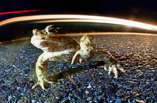 """""""Amphibien haben die absolute Arschkarte"""""""